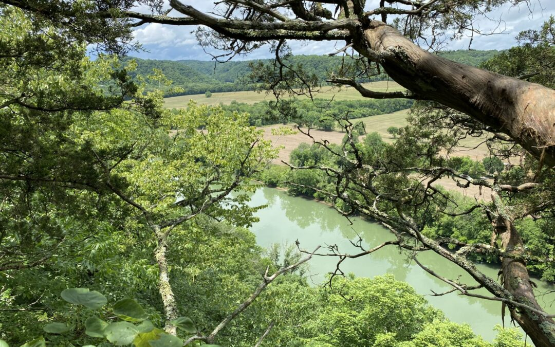 17.35+/- Acres • Cumberland River View • 2 Tracts