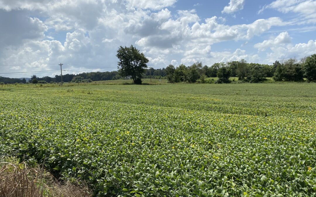 20+- ACRES • ROW CROP GROUND • IN TRACTS